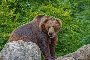 Bild zeigt Bären